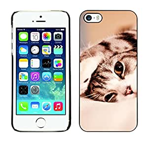 Hot Style Cell Phone PC Hard Case Cover // M00100732 in cat bed animals // Apple iPhone 5 5S