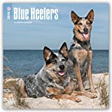 Blue Heelers 2018 12 x 12 Inch Monthly Square Wall Calendar, Animals Dog Breeds