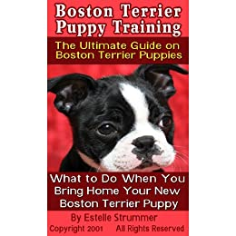 training a boston terrier puppy boston terrier puppy training the ultimate guide on 4752