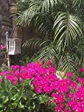 succulent ground cover Vibrant Magenta Pink Ground Cover Succulent Flower Ice Plant 15 Healthy Cuttings NHKM13