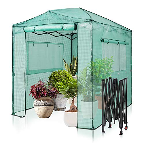 EAGLE PEAK 8'x6′ Portable Walk-in Greenhouse Instant Pop-up Fast Setup Indoor Outdoor Plant Gardening Greenhouse Canopy, Front and Rear Roll-Up Zipper Entry Doors and 2 Large Roll-Up Side Windows