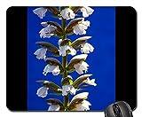 Mouse Pads - Balkan B?renklau Plant Bloom White Acanthus