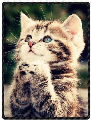 Lovely Cat Queen Size Plush Blake Blanket Best Gift 58' x 80' (Large)