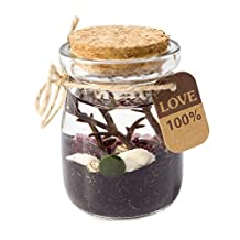 OMEM Marimo Moss Balls Glass Aquarium Kit (purple)
