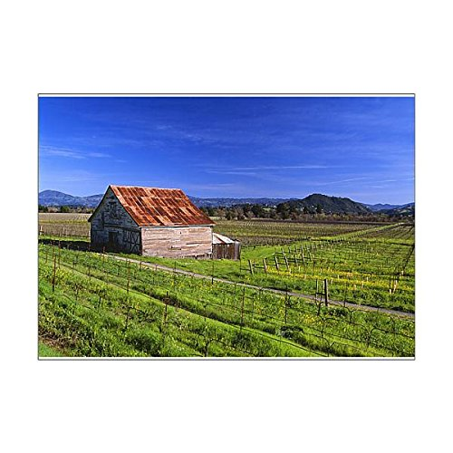 A1 Poster of USA, California, Dry Creek Valley, wine country, an old barn in a vineyard (11168596)