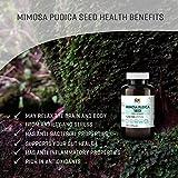 Mimosa Pudica Seed 100 Capsules, 1200 mg Per