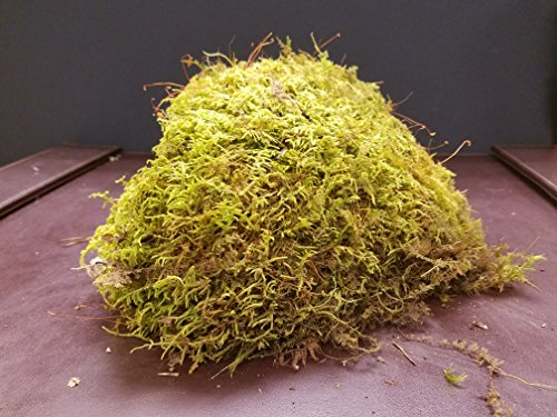 live-fern-moss-sheet-moss-for-terrariums-gardens-crafts-bonsai-1-quart