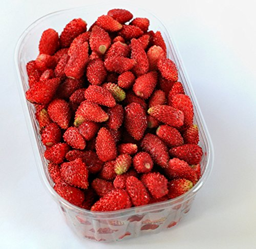 100x Giant Forest Strawberries Red Seed Seeds Plant Rarity Garden Edible Fruit Novelty # - Springs 111 Palm