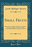 Amazon / Forgotten Books: Small Fruits Shrubs, Vines, Gladiolus, Asparagus, Strawberries, Raspberries, Grapes, Fruit Trees, and the Famous Alfred Blackberry Spring and Fall 1928 Classic Reprint (South Michigan Nursery)