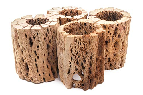 My Pet Patrol 3 to 48 Inch All Natural Teddy Bear Cholla Wood Extra Hollow Large Untreated Organic Aquarium Driftwood Decoration Chew Toy Shrimp Crab Multi-Quantity (4 Pieces, 3 inch)