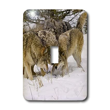 3dRose LLC lsp_11375_1 Gray Wolf Canis Lupus Alpha Male And