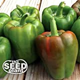 California Wonder Bell Pepper Seeds - 150 Seeds Non-GMO