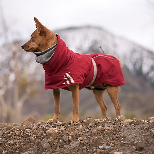 Hurtta Extreme Warmer Dog Winter Jacket, Lingon, 14 in by Hurtta