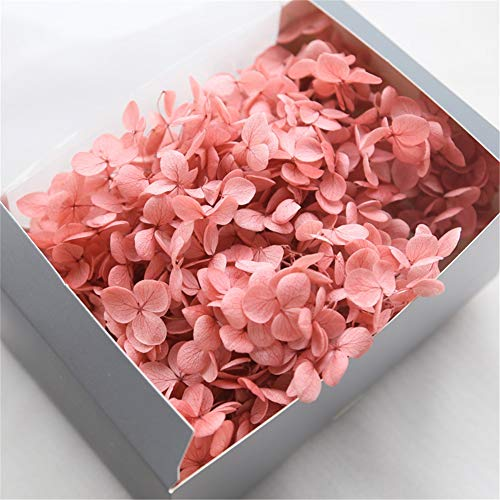 Lovgrace Preserved Flowers Natural Dried Hydrangea Flower Head with Box Valentine's Day DIY Gift Wedding Decor 20g