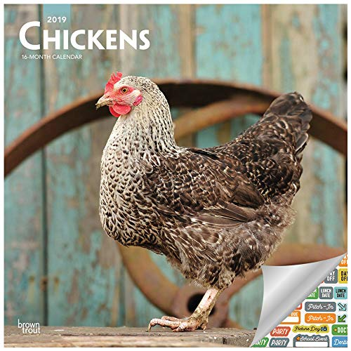- Chickens Calendar 2019 Set - Deluxe 2019 Chickens Wall Calendar with Over 100 Calendar Stickers (Chickens Gifts, Office Supplies)