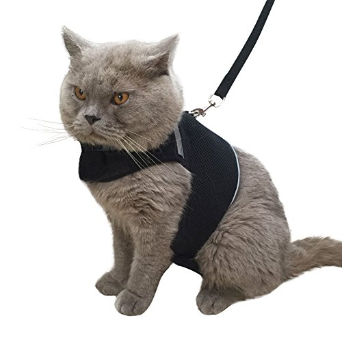 cool cat harness - 1