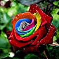 Egrow 200Pcs Rainbow Rose Seeds Rare Colorful Flower Potted Plant Garden Bonsai (Color #2)