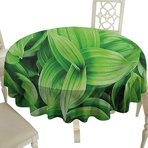 Cranekey Plaid Round Tablecloth 65 Inch Plant,Close-up Beautiful Tropic Foliage Pattern Helleborus Leaves Natural Herbs Wildflowers,Lime Green Great for,Holiday Dinner & More
