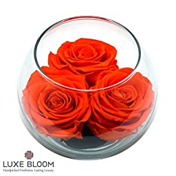 """Luxe Bloom 3 Fresh Cut Preserver Tangerine Orange Roses and Greens in 4"""" Glass Bubble Lasts 60 Days"""