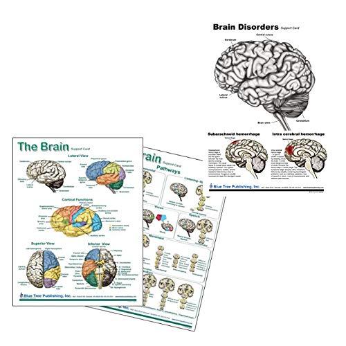 Brain Chart, and Brain Disorders Chart Neurology Blue Tree Publishing Inc. 4101072
