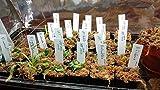 KINGLAKE 100 Pcs 4 Inch Plastic Plant Nursery