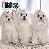 Maltese Dogs Wall Calendar 2017 {jg} Best Holiday Gift Ideas - Great for mom, dad, sister, brother, grandparents, , grandchildren, grandma, gay, lgbtq.