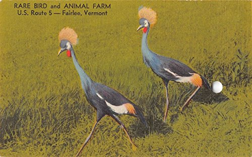 Fairlee Vermont Rare Bird Animal Farm Linen Antique Postcard J21694