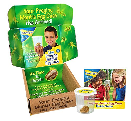 UPC 735569007008, Insect Lore Live Praying Mantis Egg Case - Hatching Kit Toy REFILL - SHIP NOW