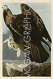 "Golden Eagle by John James Audubon, Art Print Poster - Paper Size 11"" x 14"" Image Size 8"" x 12""(40470)"