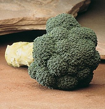 David's Garden Seeds Broccoli Marathon D151 (Green) 100 Hybrid Seeds