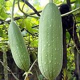 Smooth Loofah, Luffa Aegyptiaca, Gourd Seeds
