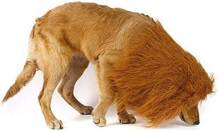 Rhww Melena De LeóN para Perro, Mascota Perro LeóN Melena Disfraz ...