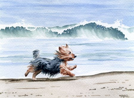 (Yorkshire Terrier at the Beach Art Print by Watercolor Artist DJ Rogers)
