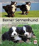 Berner Sennenhund (Hunderassen)