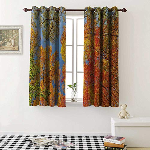 shenglv Leaves Decor Curtains by Falls Colors National Country Park Nature Observation Base Perspective Photo Curtains Girls Bedroom W63 x L63 Inch Orange Blue Green