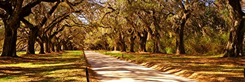Posterazzi PPI151301L Trees in a Garden Boone Hall Plantation Mount Pleasant Charleston South Carolina USA Poster Print, 36 x 12, Varies from Posterazzi