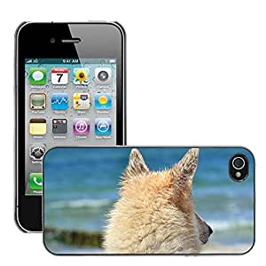 Hot Style Cell Phone PC Hard Case Cover // M00108735 Animal Dog Hybrid Sled Dog Sea // Apple iPhone 4 4S 4G