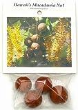 Hawaiian Macadamia Nut Tree Plant Seeds ~ Grow Hawaii (Pack of 50)