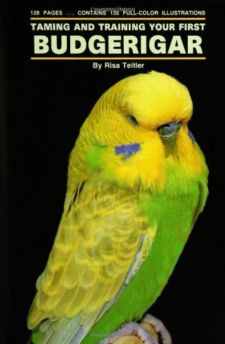 First Parakeet - 7