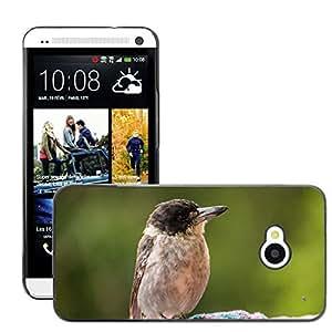 Super Stella Slim PC Hard Case Cover Skin Armor Shell Protection // M00145134 Butcherbird Australia Bird Fly Wings // HTC One M7