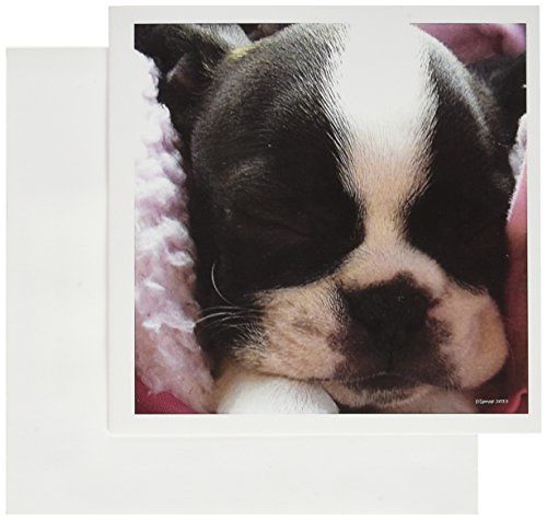 3d Rose 3dRose Boston terrier puppy - Greeting Cards, 6 x...