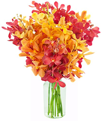 KaBloom Fall Collection: Exotic Red and Golden Yellow Mokara Orchids from Thailand with - Special Delivery Is Day Next
