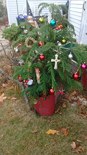 Christmas tree , Christmas tree..O What You Mean To Me: A Bipolar Chtristmas What Christmas Means To Me Poem