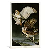 iCanvasART VAC289-1PC3-26x18 Barn Owl Canvas Print by Vintage Apple Collection, 26 by 18-Inch, 0.75-Inch Deep