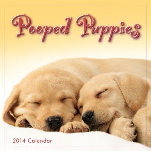 Dog 2014 Mini Calendar - Pooped Puppies 2014 Mini (calendar)