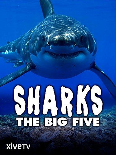 Sharks: The Big Five