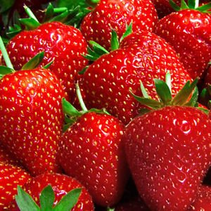 - Albion Strawberry Plants Organic Grown 20 Bare Root Crowns Day Neutral Non-GMO