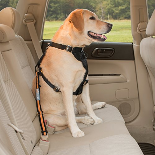 Dog Car Seat With Seatbelt