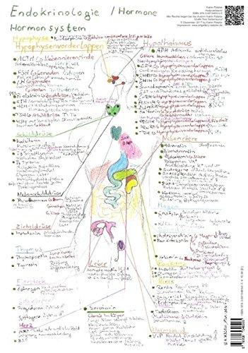 Endokrinologie Hormonsystem - A3: Hormone kompakt und visuell lernen