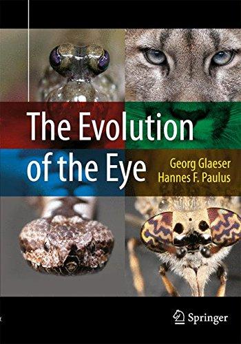 The Evolution of the Eye (Lens Eye Color)